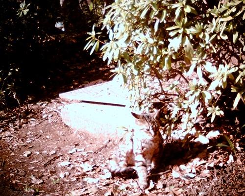 小さいトラ猫