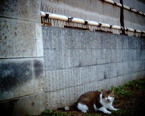 さっきの猫がまだいた