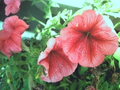 そのまま撮った花