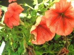 レンズを覆ってから撮った花